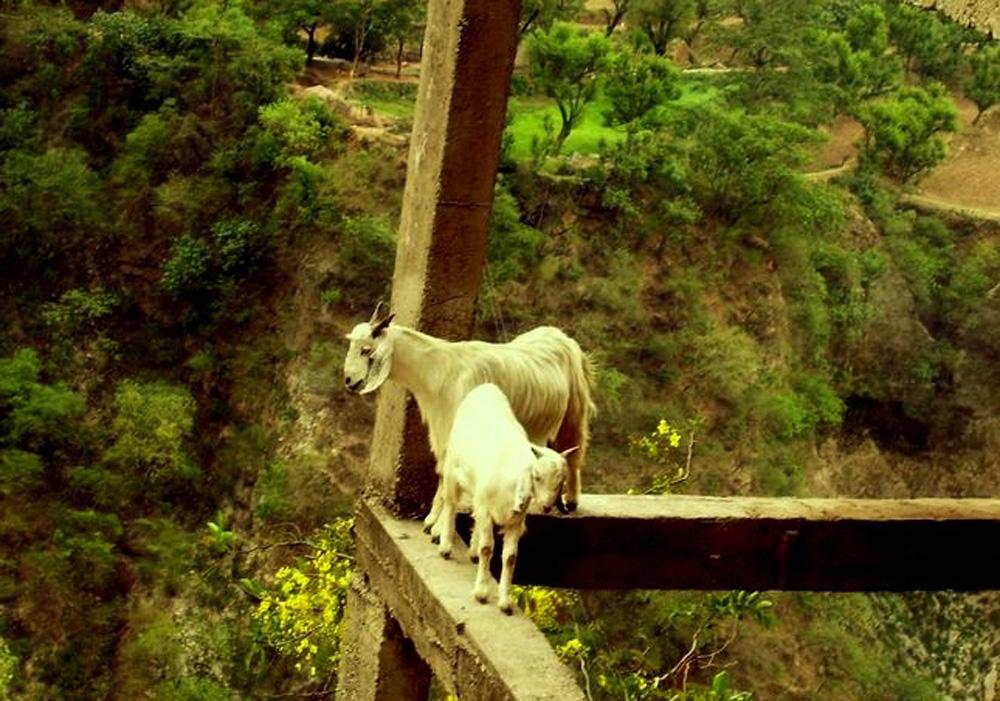 Photograph by Aparna Pathak
