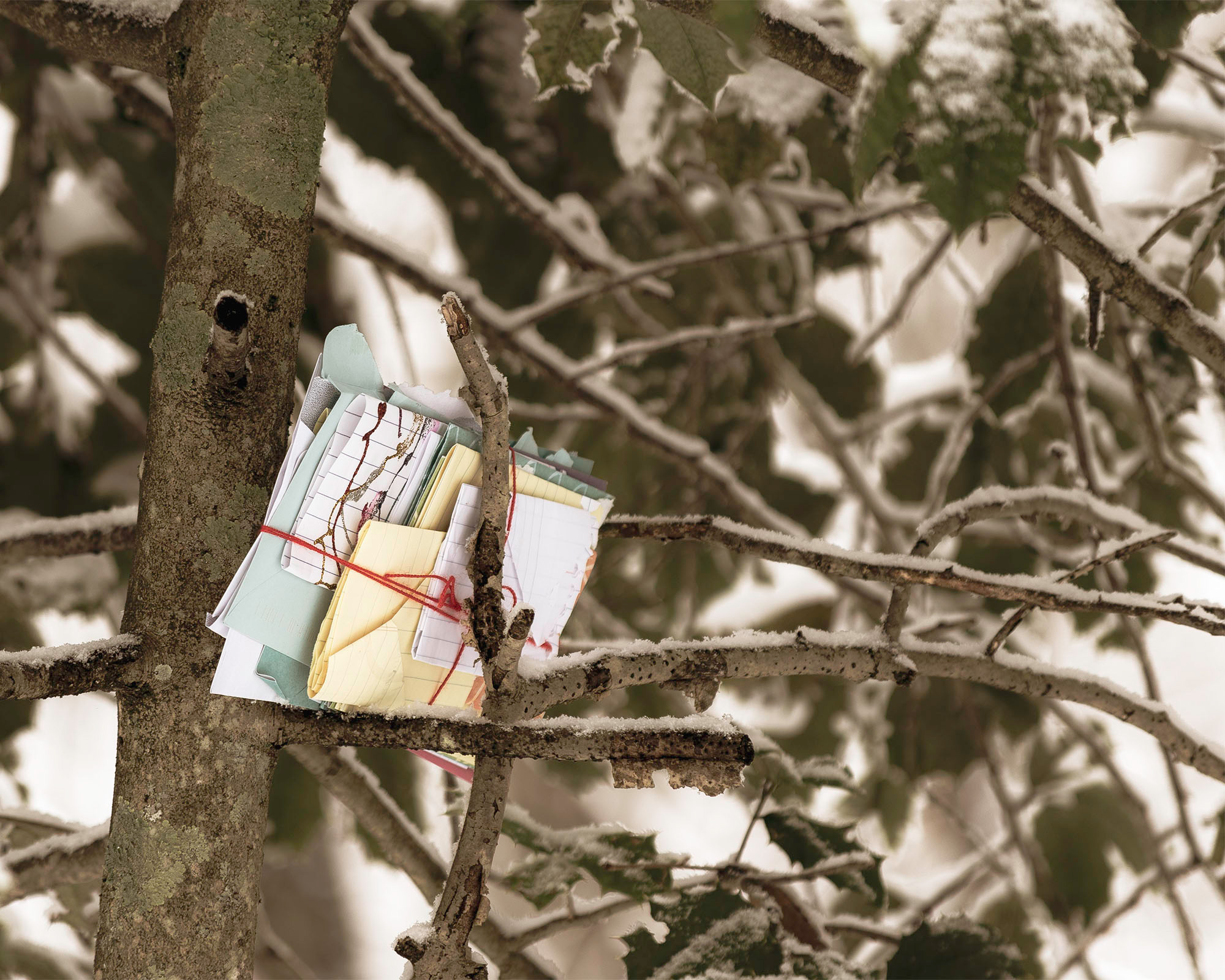 photo of letters left in a snowy tree