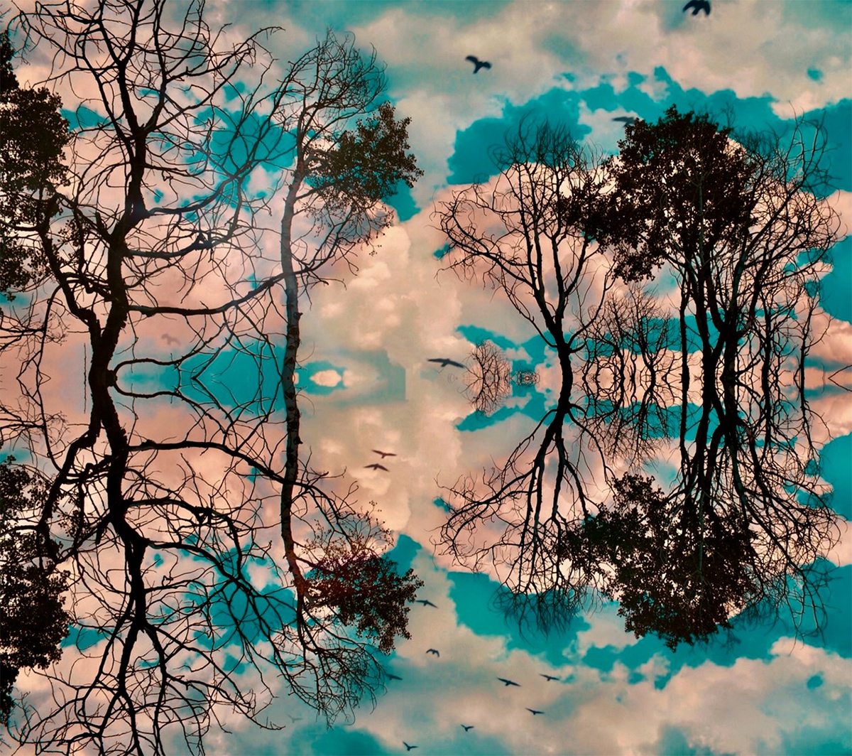 Cloud Dance by Claire Ibarra, photo of birds and trees in silhouette against a lake, mirrored on the surface of the water